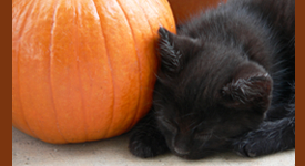 Cat Sleeping With Pumpkin